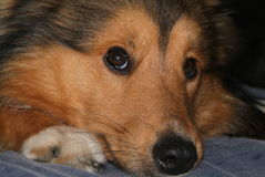 Dog1 Immagini Stock