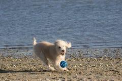 Dog4 fotografía de archivo libre de regalías