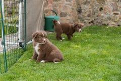 Dogbabies curieux dans le jardin Photos libres de droits