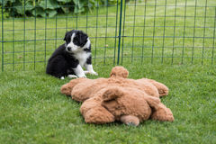 Dogbaby en vert Images libres de droits