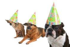 Dogday feliz fotos de stock