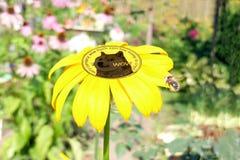 Dogecoin de la moneda dentro de la flor Imagen de archivo libre de regalías