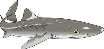 Dogfish Stock Photography