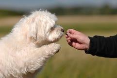 dogfood Стоковые Фото