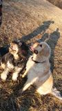 Dogfriends royaltyfria foton