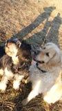 Dogfriends royaltyfria bilder
