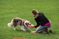 Dogfrisbee竞争在华沙,波兰 免版税库存图片
