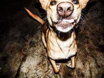 Dogger Στοκ Εικόνες