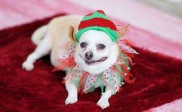 Doggie στην εξάρτηση Χριστουγέννων στοκ φωτογραφία με δικαίωμα ελεύθερης χρήσης
