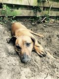 Doggie στο ρύπο στοκ εικόνα με δικαίωμα ελεύθερης χρήσης