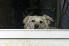 Doggie в окне Стоковая Фотография
