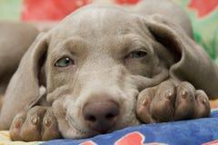 doggie Стоковые Фото