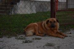 Doggie32 库存图片