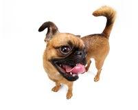 Doggie Royalty Free Stock Photos
