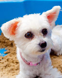 Doggie Стоковая Фотография