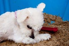 Doggie Royalty-vrije Stock Afbeeldingen