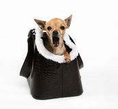 Doggie bag Stock Images