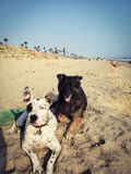 Doggie beach day royalty free stock photo