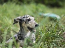 Doggie bonito Fotos de Stock Royalty Free
