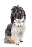Decorative doggie with a bow. Stock Photo