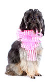 Decorative dog with a pink bow Royalty Free Stock Photo