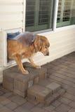 Doggie door and pet Stock Image