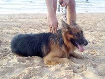 Doggie stock image