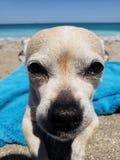 Doggie het lounging op het strand royalty-vrije stock foto