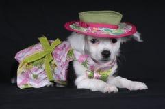 Doggie kleding-omhoog Stock Fotografie