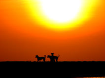 Doggie Play. Dogs playing under the beautiful setting sun Stock Photography