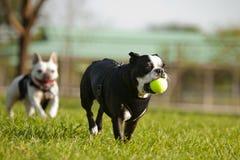 Free Doggie Playtime Stock Image - 24300281