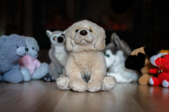 Doggie from plush. In an environment of soft toys stock photography