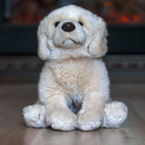 Doggie from plush. The doggie from plush sits on a wooden floor stock images