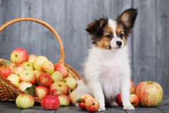Doggie sits near the basket Stock Photo