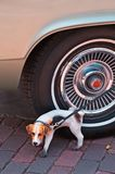 Doggie Statue and Car Tire Royalty Free Stock Images