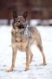 Doggie on walk. Stock Photos