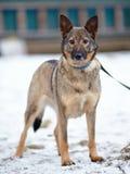 Doggie on walk. Royalty Free Stock Photo