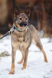 Doggie on walk. Royalty Free Stock Photos