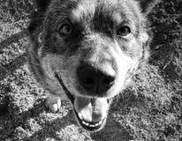 Doggiedagen stock foto