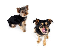 Doggies Royalty Free Stock Photography
