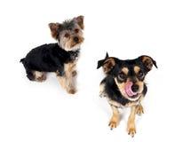 doggies Стоковая Фотография RF