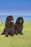 Doggies Stock Photography