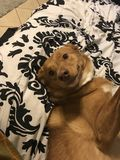 Doggo lizenzfreies stockbild