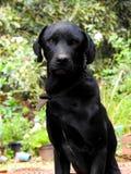 黑doggo 库存照片