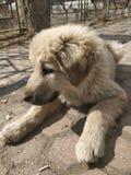 Doggo zdjęcia stock