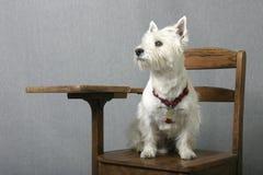 Doggone elegante Imágenes de archivo libres de regalías