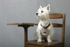 Doggone smart Royalty Free Stock Images