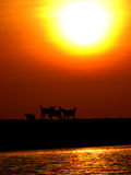 Doggone Sun. Dogs walking on the beach while the sun sets behind them Stock Photo