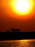 Doggone Sun Foto de Stock