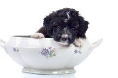 doggy малый стоковые фотографии rf
